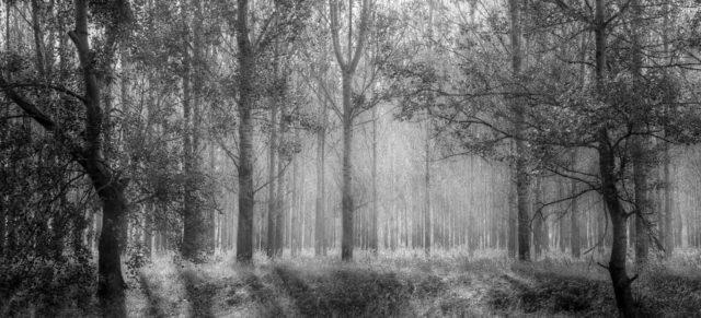 森林 自然