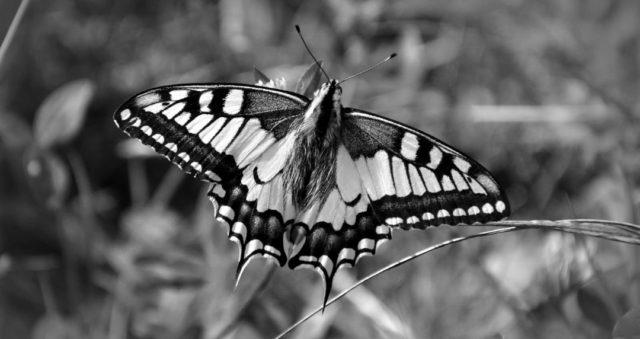 美しい蝶々の夢