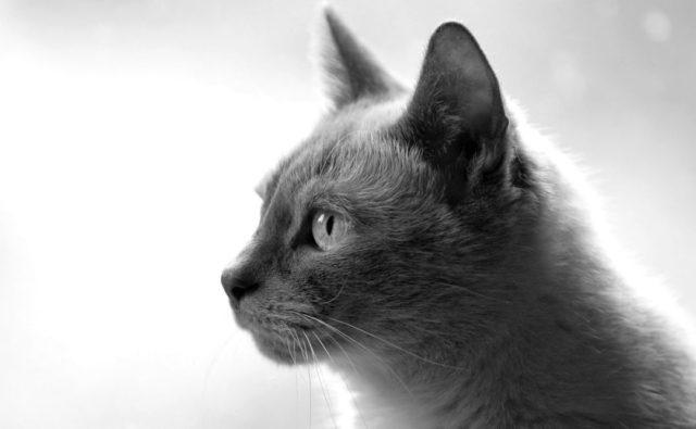 猫 ペット