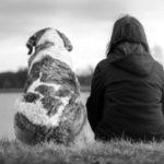 夢に犬が出てきた方へのスピリチュアルメッセージ