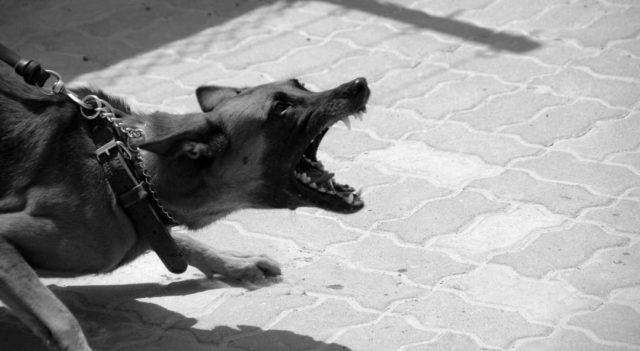 犬 吠える