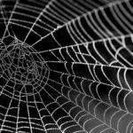夢に蜘蛛が出てきた方へのスピリチュアルメッセージ