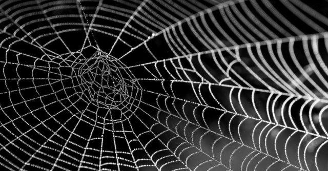 蜘蛛の巣 朝露
