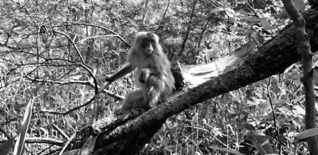 木に登る猿