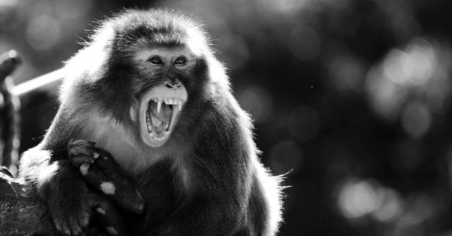 猿 牙 噛む 威嚇