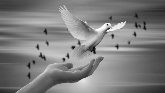 手から飛び立つ鳩 平和 癒し