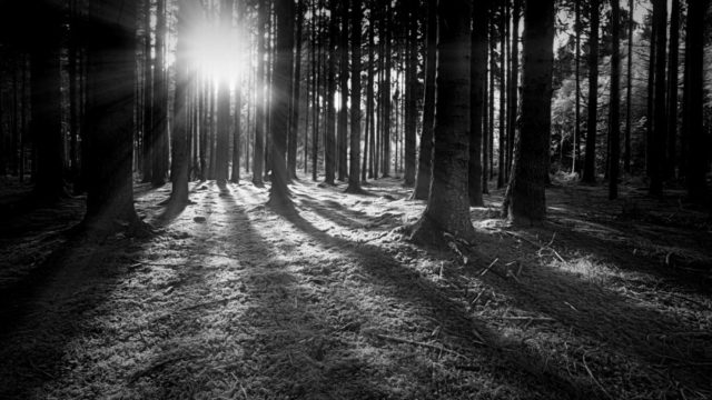 森林 光 希望