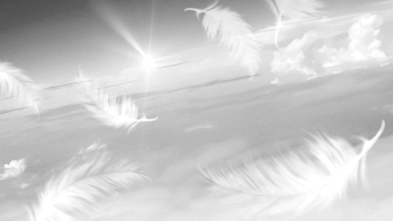 空を舞う鳥の羽