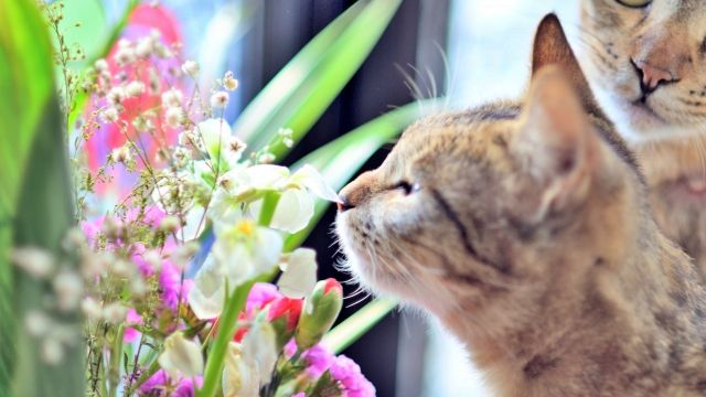 いい匂い 花の匂いを嗅ぐ猫