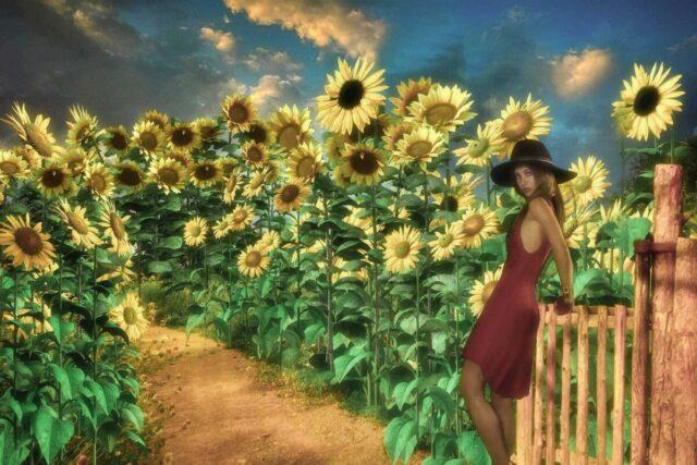 向日葵の絵画 ひまわり ヒマワリ 女性 自然