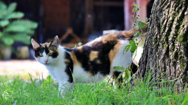 昼間 野良猫 三毛猫