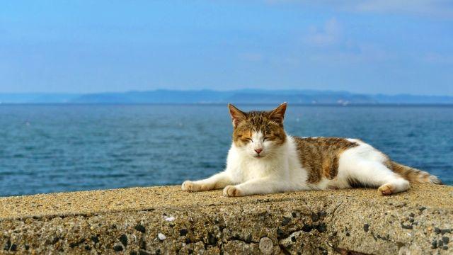 朝の海辺の三毛猫