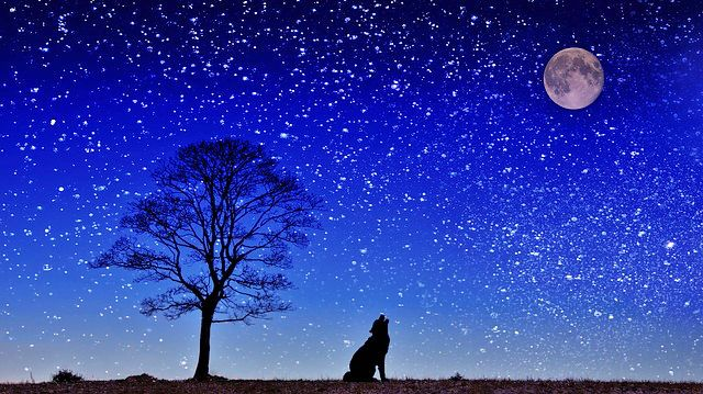 満月 犬の遠吠え 夜